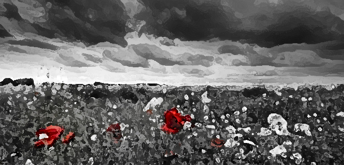 a field of poppies for heidi's mom